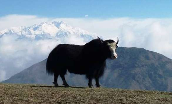 Adventure Tours in Darjeeling
